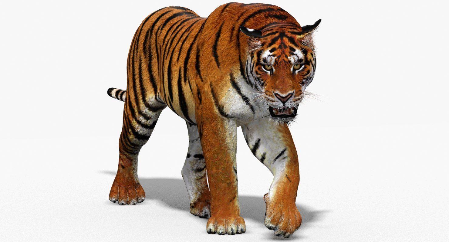 3D tiger animation Tiger, Animation, 3d model
