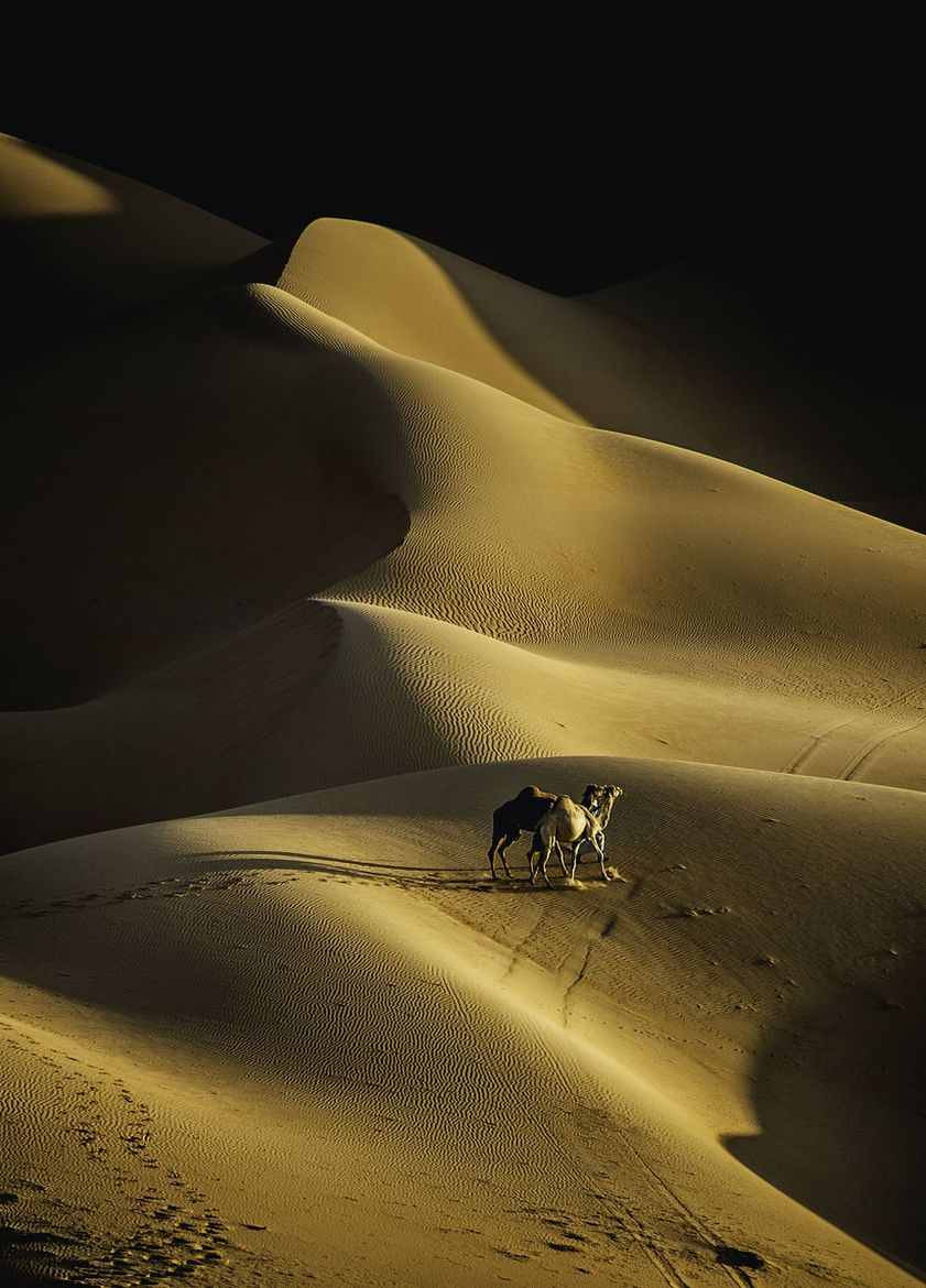 Photograph the desert in the eyes of photographers by Adeeb Alani on 500px