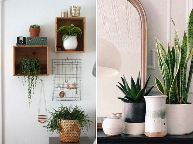 Como decorar con plantas de interior decorar con plantas pinterest plantas de interior - Decorar con plantas de interior ...