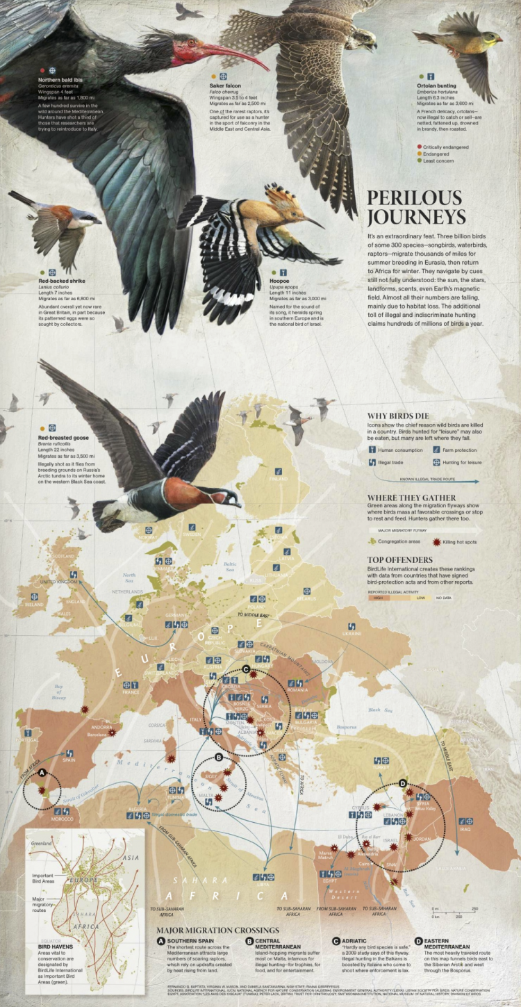 This Is Visual Journalism 27 Visualoop Animal Infographic Scientific Poster Infographic