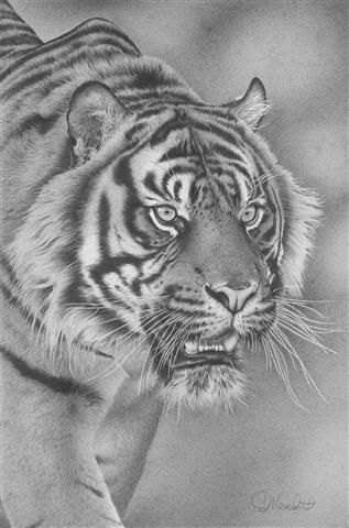 Stealth-Sumatran tiger by ~clive64 on deviantART [pencil drawing] #AnimalArt #Tiger