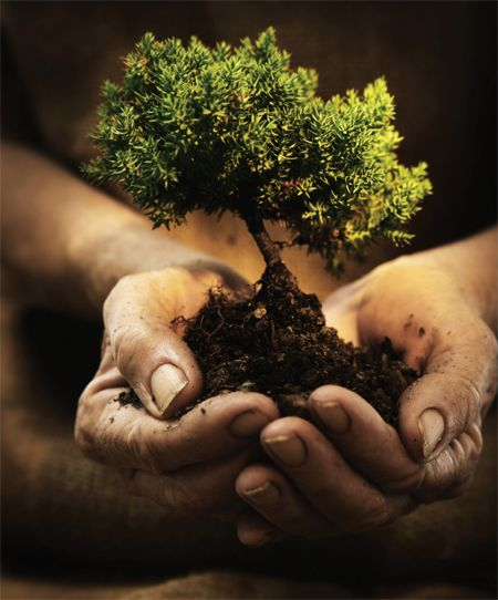 Ecology is the science which studies the biota and the environment, and their interactions. #ecology #greenecology