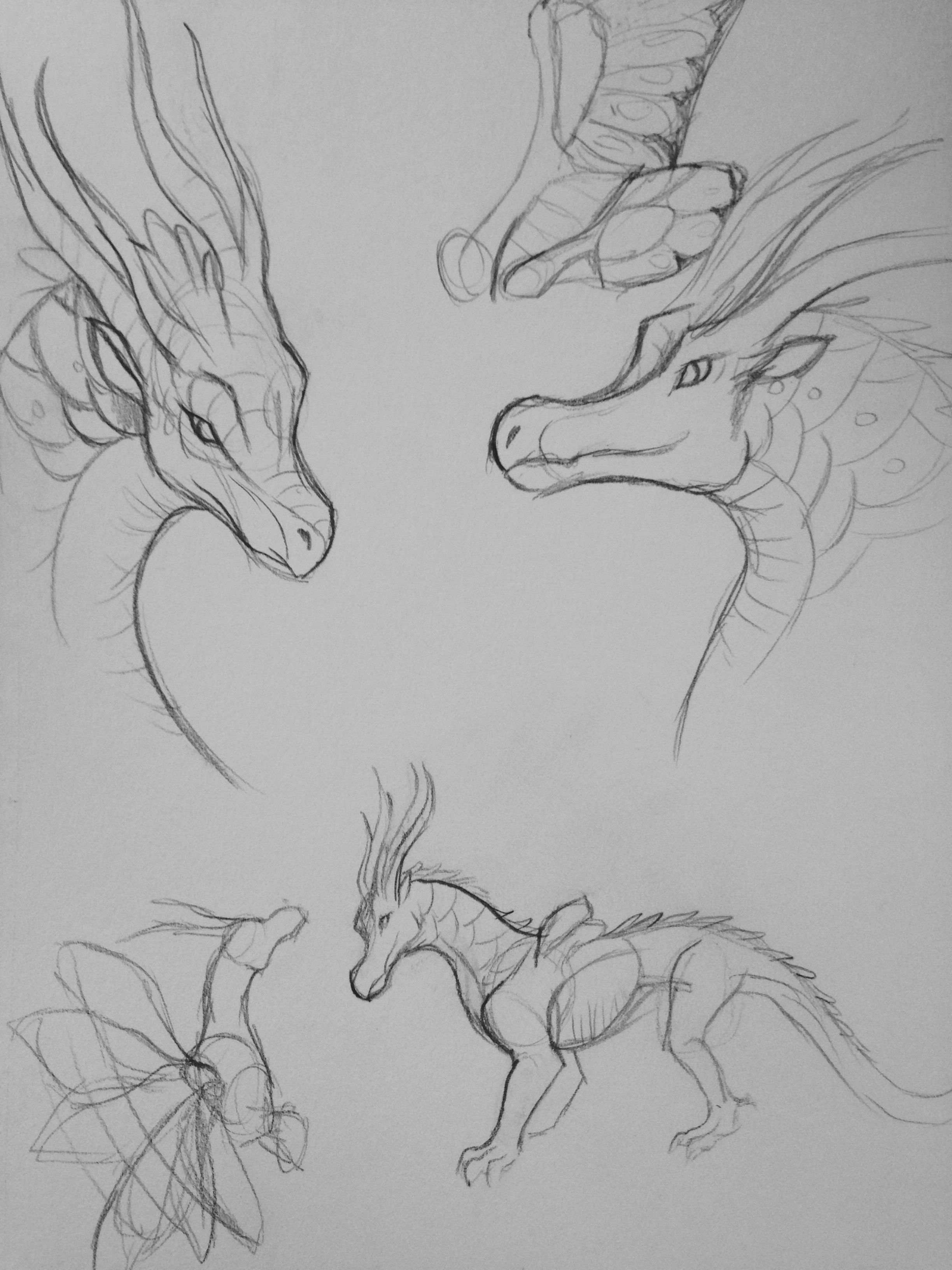 Art Sketch Fire Dragon