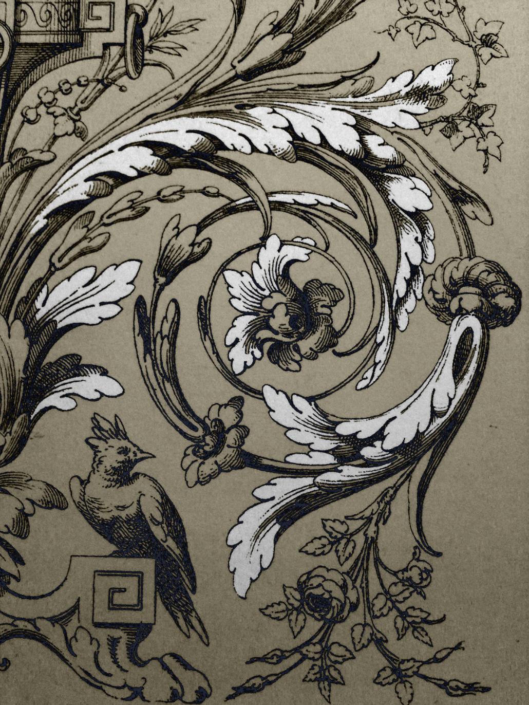 Ornamental Scroll Drawing Ornament Drawing Acanthus Ornaments