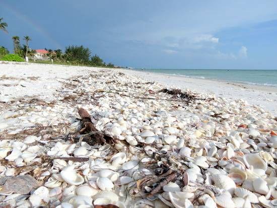 Bonita Beach Florida Typical Shell Pile On Fl