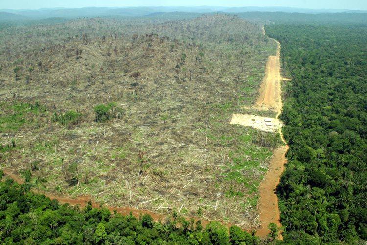 Amazonian Deforestation Soars Deforestation Amazon Rainforest