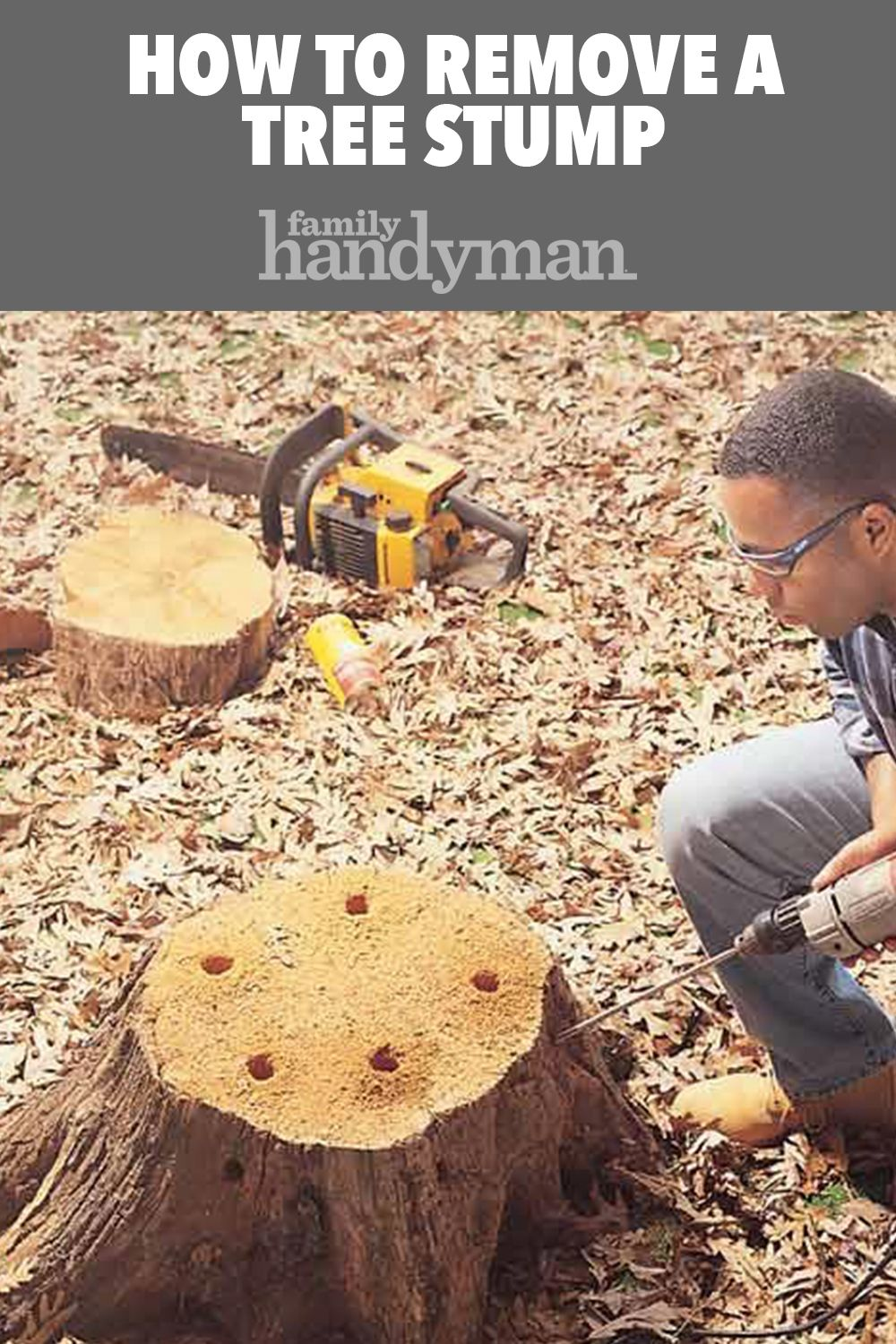 How To Remove A Tree Stump Painlessly Tree Stump Outdoor Trees