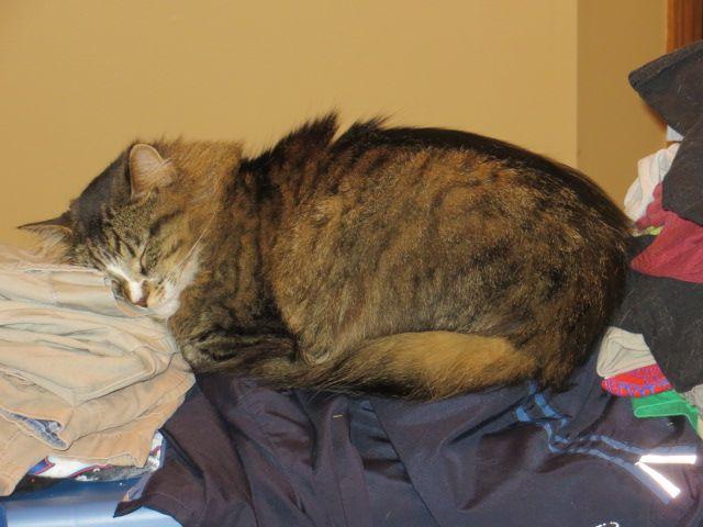 Fuzzy asleep, resting her head like a human.