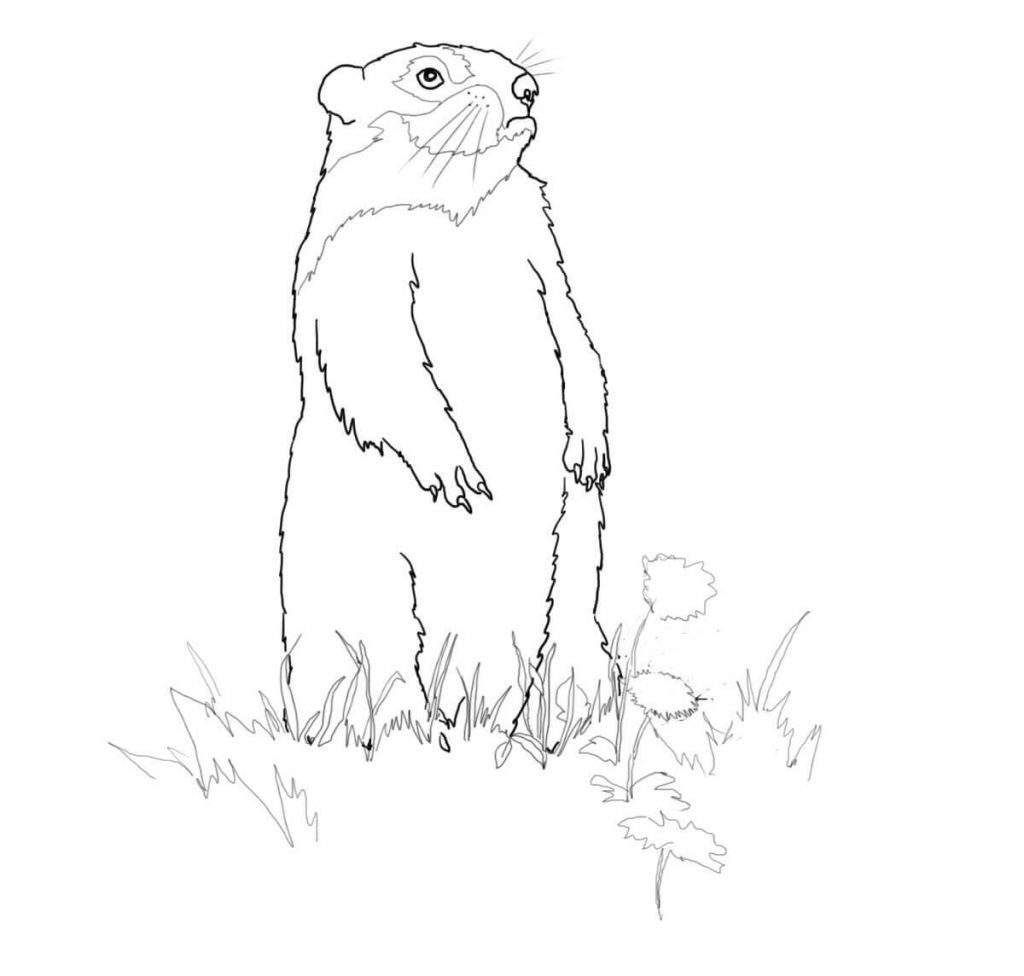 Groundhog Coloring Pages Best Coloring Pages For Kids Printable Coloring Pages Coloring Pages Turtle Coloring Pages