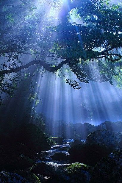 nature showered in moon light