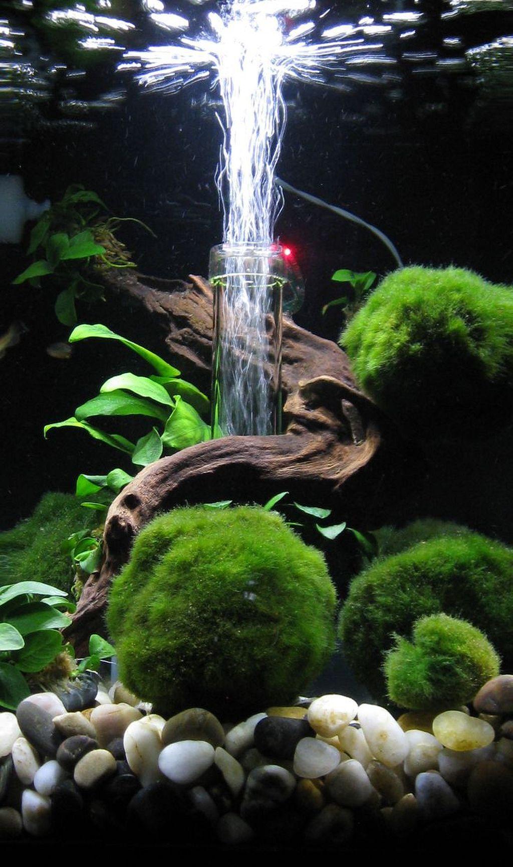 30+ Awesome Fish Tank Ideas | Aquarium landscape, Fresh ...