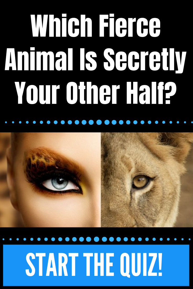 Which Fierce Animal Is Secretly Your Other Half Everything Cool