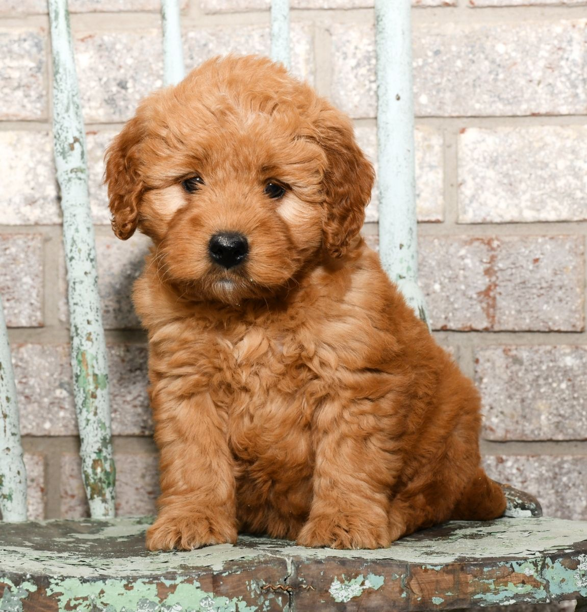 Puppies for Sale Baby animals pictures, Cute baby animals