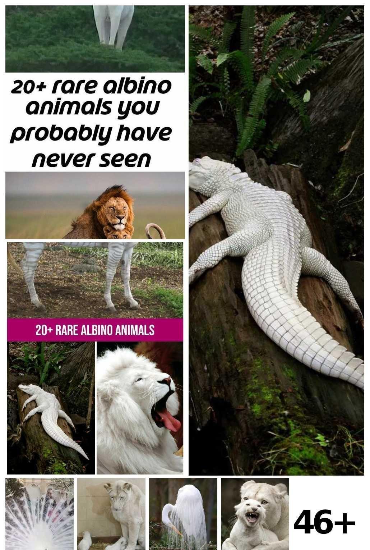 46  Albino Animals Awesome Ideas -  46  Albino Animals Awesome Ideas  - #albino #albinoanimal #amazinganimals #animals #Awesome #basicanimaldrawings #ideas