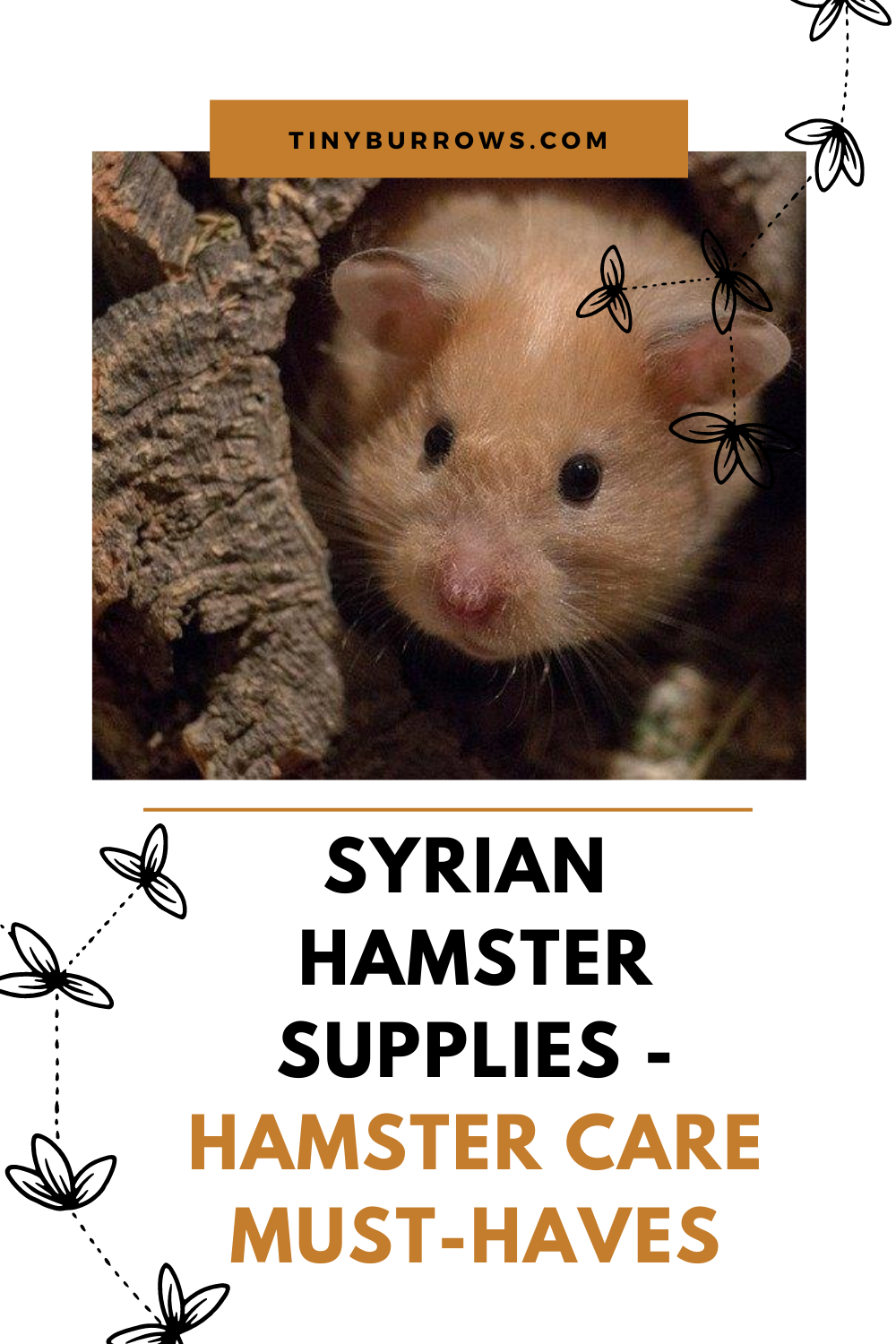 Syrian Hamster Supplies Hamster Care MustHaves in 2020
