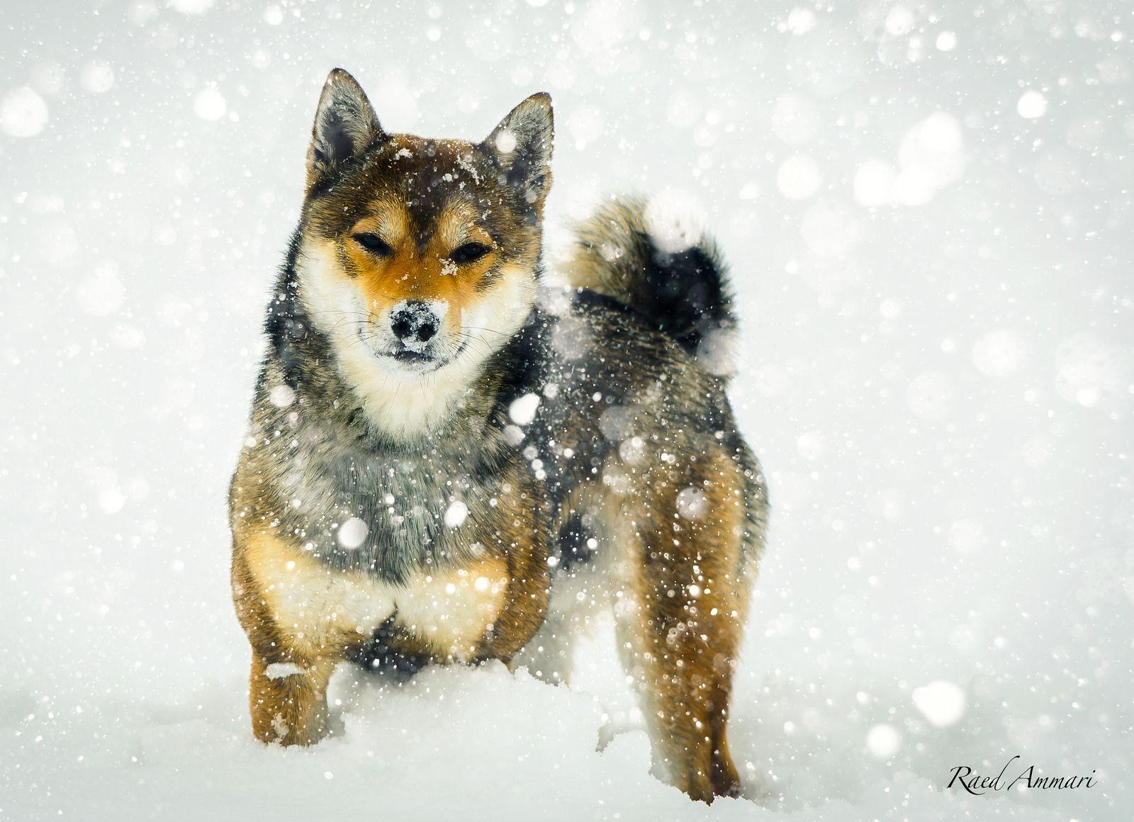 Akuma Vs Snow