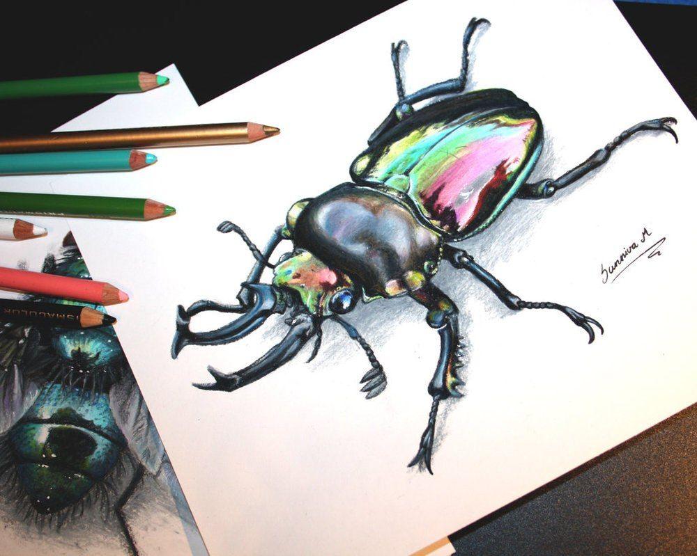 пизду красивые рисунки жуков дня