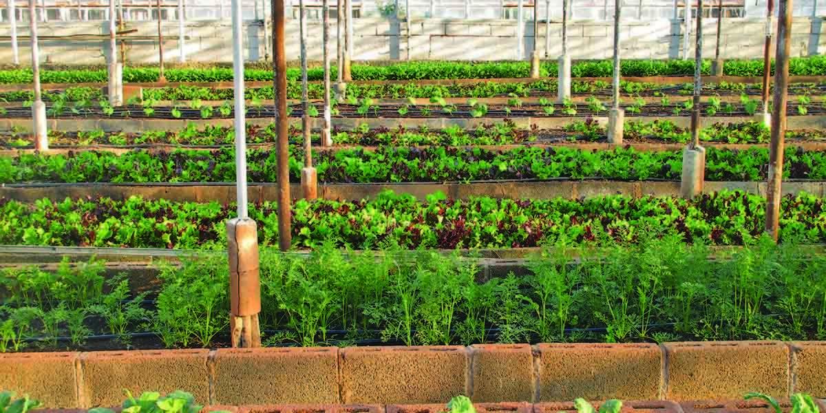 Small Backyard Farming Ideas, 2020 (Görüntüler ile) | Arizona