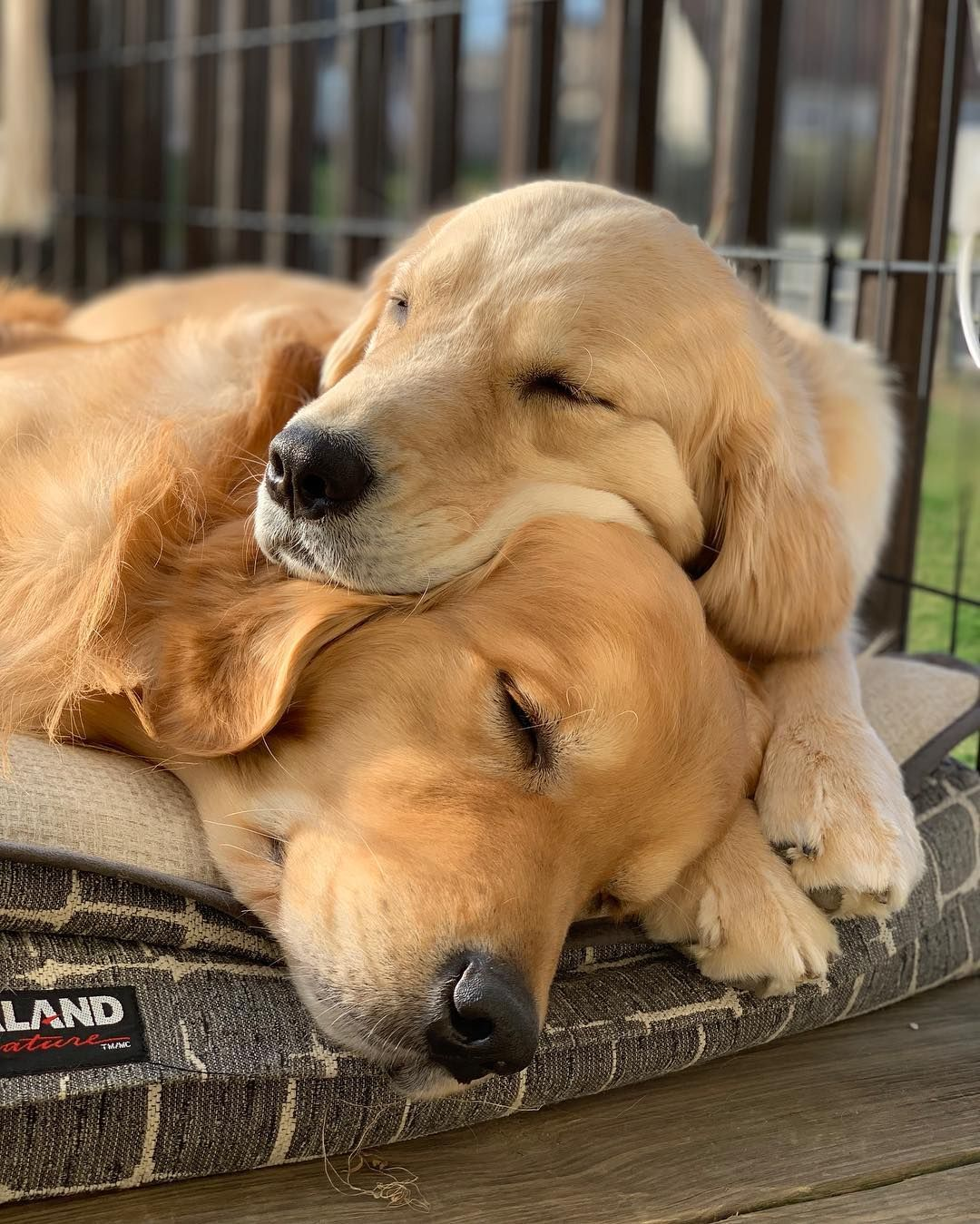 Waterfront Golden Retrievers On Instagram When You Re Not Really In A Relationship But You Re Not Si Golden Retriever Labrador Mix Golden Retriever Old Dogs