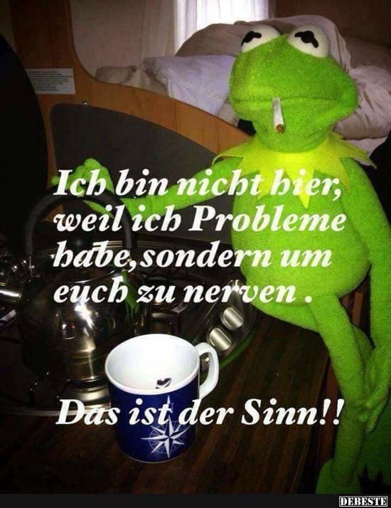 Was Kermit Sagt Was Is Hier Eigentlich Los
