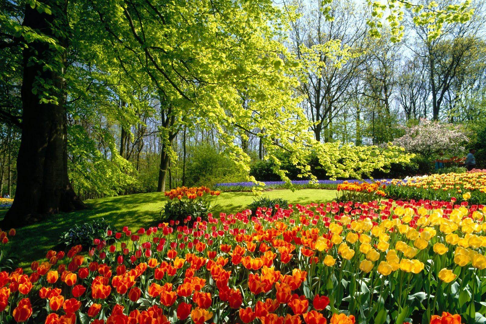 flower forest cool wallpapers beautiful flower garden
