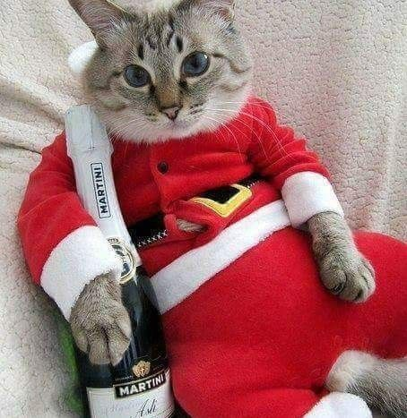 Cat In Christmas Costume u0026 With A Martini Liquor Bottle. & Cat In Christmas Costume u0026 With A Martini Liquor Bottle. | kit cat ...