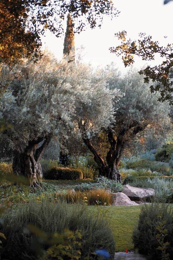 Paisagismo backyard design garden garden design und for Gartengestaltung olivenbaum
