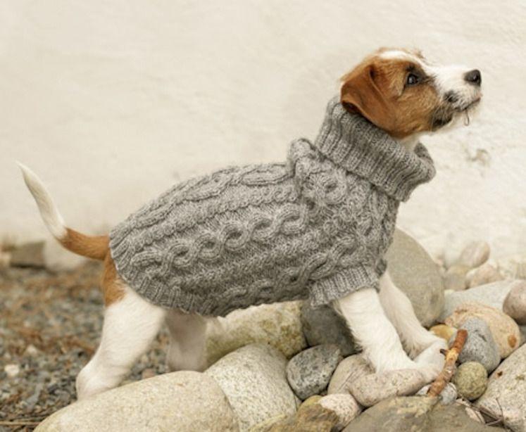 achat manteau laine tout petit chien xs