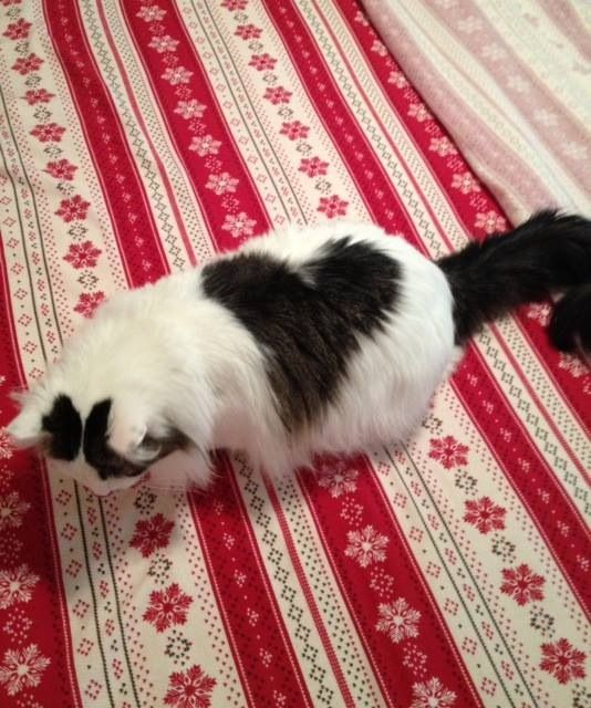 Mr Deeds heart is so cute & he is my Valentine!