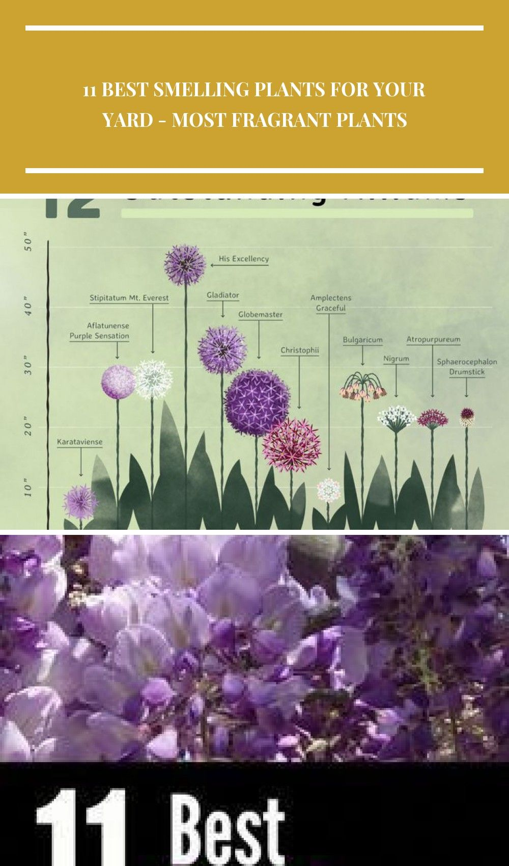 How to Combine Alliums with Perennials  Longfield Gardens  Fleurs  Planificacion de jardines