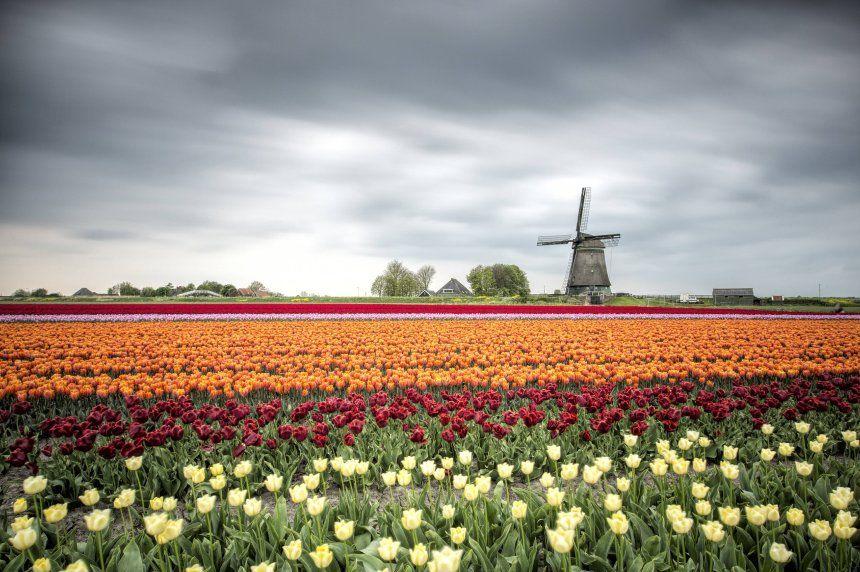 Tulpenfeld in den Niederlanden  Neue Bilder  Tulpen feld