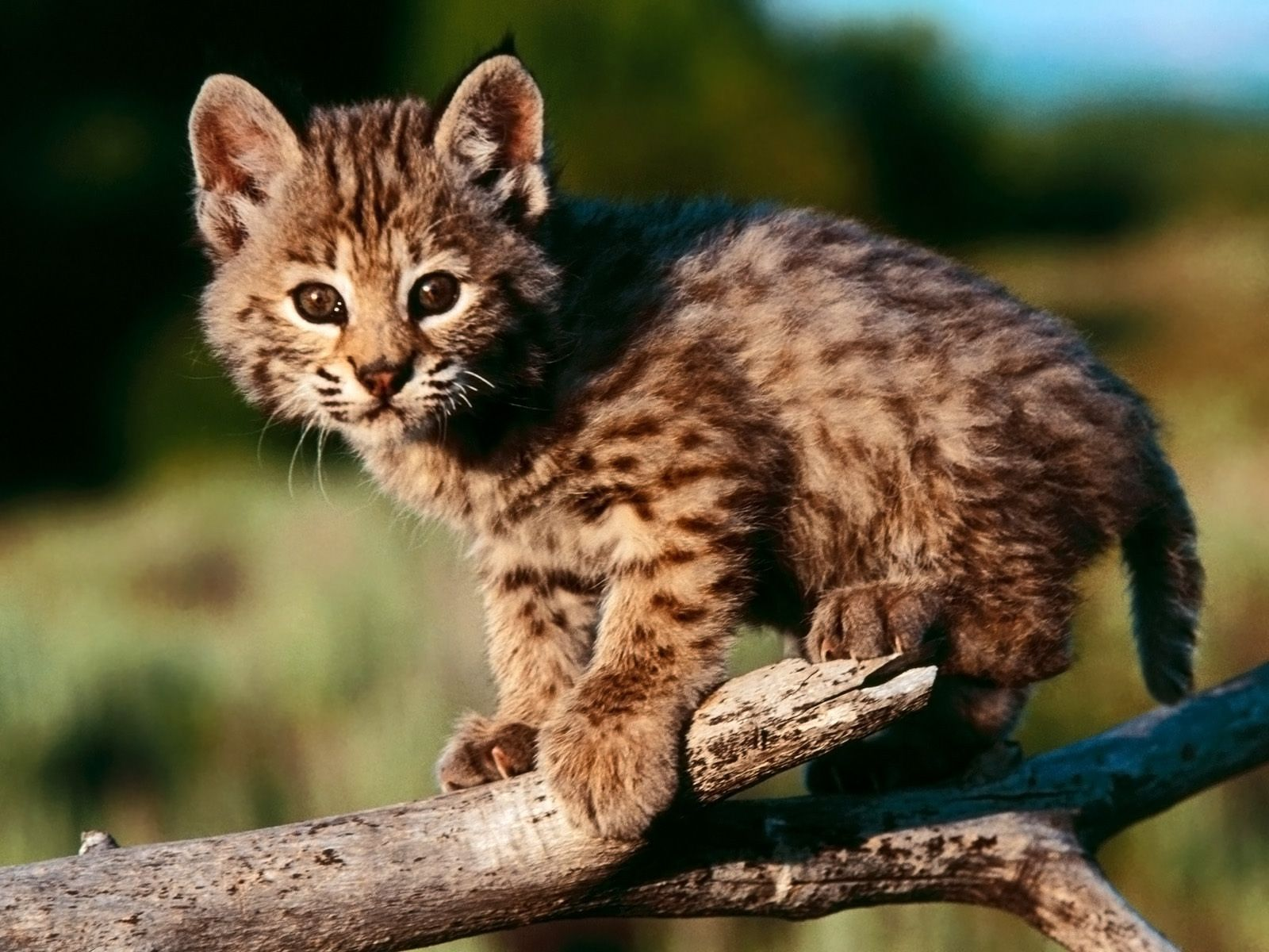 Different Type of Cats What KIND OF CATS Are You? Baby