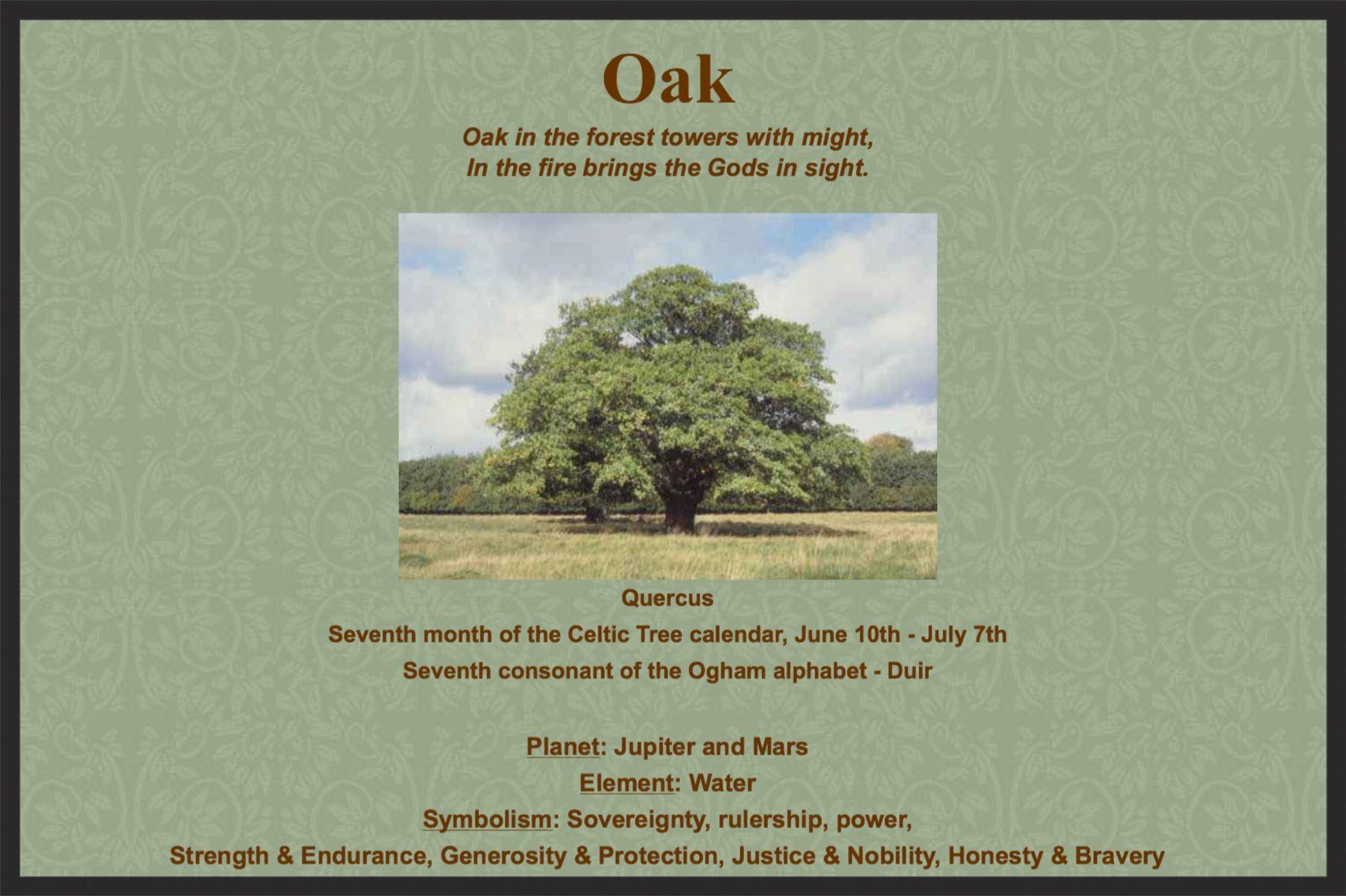 Pin by happy life on oak tree magick pinterest oak tree and magick oak biocorpaavc