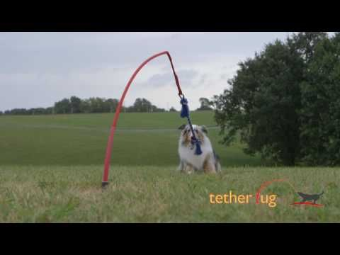 The Tether Tug Is The Perfect Outdoor Dog Toy For Any Size Or