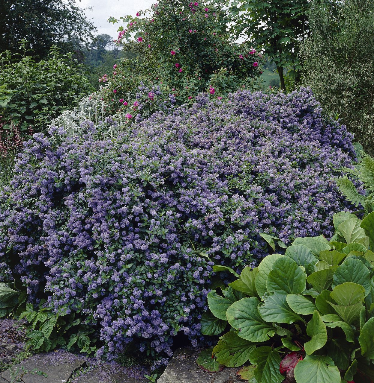 Die Sackelblume Richtig Schneiden Pflanzen Tipps Tricks 99roots Com Pflanzen Tipps Blumen