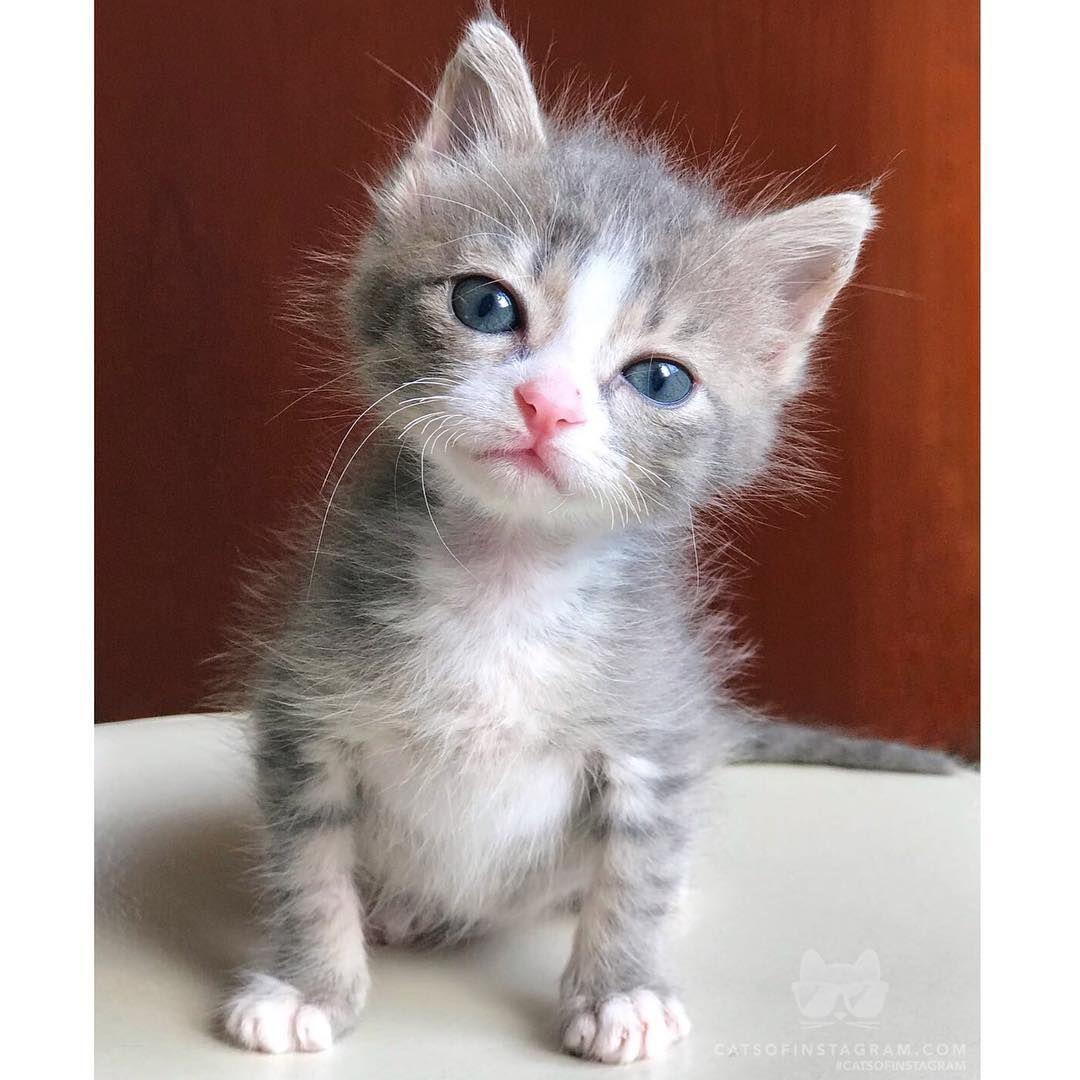 Just Woke Up Cr Teocat Photos Cutecat Catoftheday Kittylove Instakitty Catlover Cateyes Cutecats Cute Animals Animals Beautiful Pet Kitten