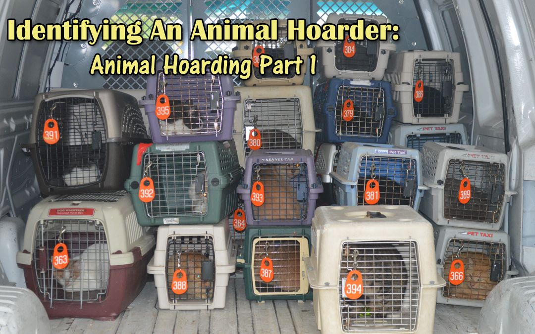 Identifying An Animal Hoarder Animal Hoarding Part 1