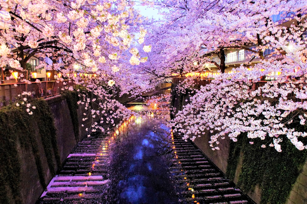 Top 10 Things To Do In Japan In April Japan Web Magazine Japan Cherry Blossom Festival Cherry Blossom Japan Yoshino Cherry Tree