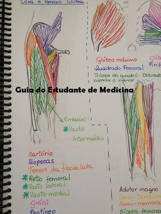 Guia do Estudante de Medicina: Dicas de estudo: Anatomia | Medicina ...
