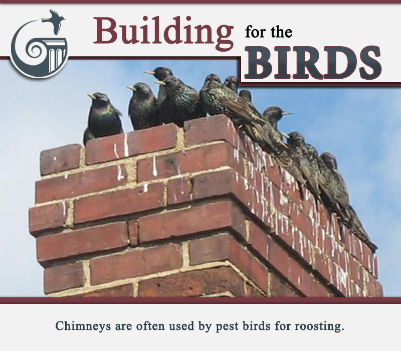 Chimneys are often used by pest birds for roosting