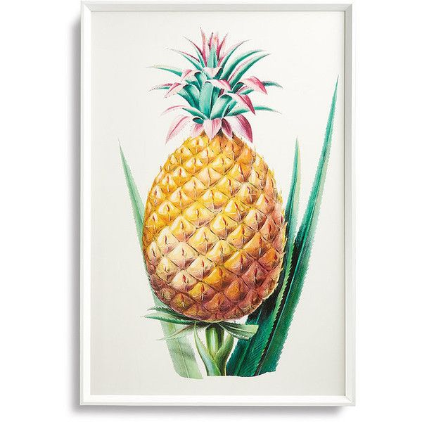Pineapple Print from the New York Botanical Garden Archives (€340 ...