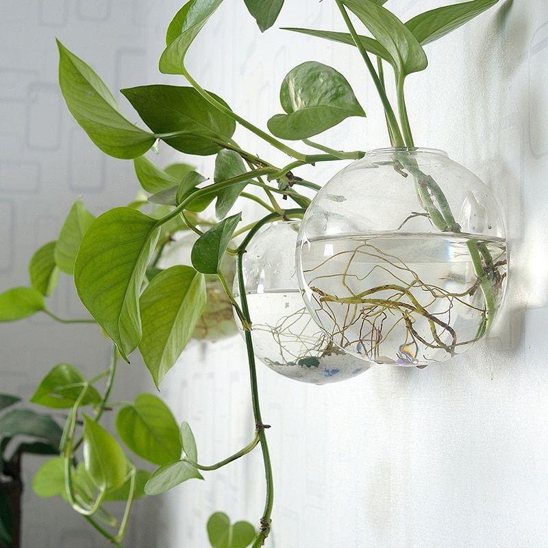 Vase Mural Pot de Fleur Suspendu en Verre Transparent Terrarium Hydroponique