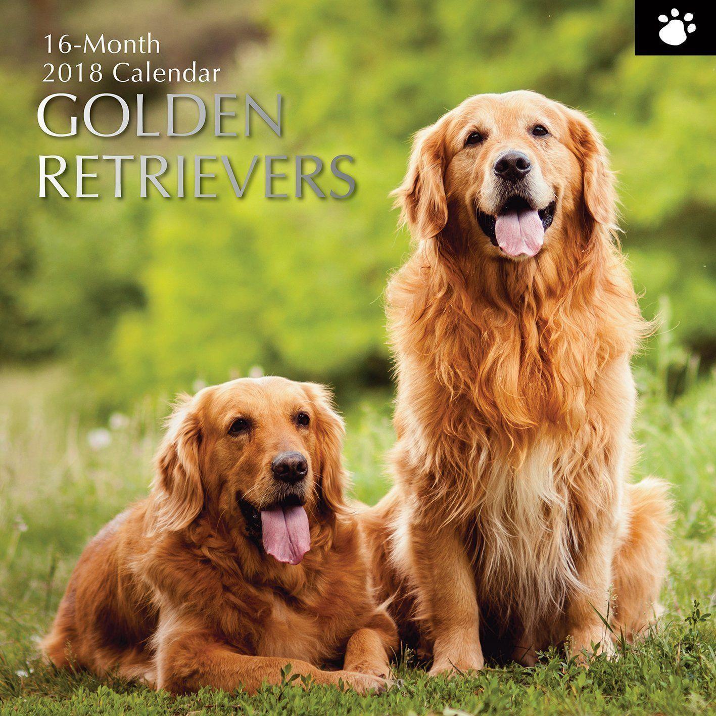 12 95 Golden Retrievers 2018 Wall Calendar Brand Dogs