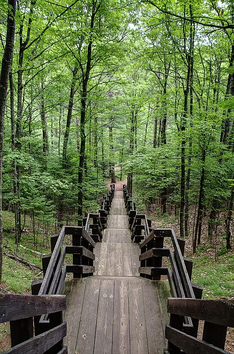 This is a picturesque view of the steps leading away from the scenic overlook at Copper Falls State Park. Copper Falls State Park, Mellen, WI