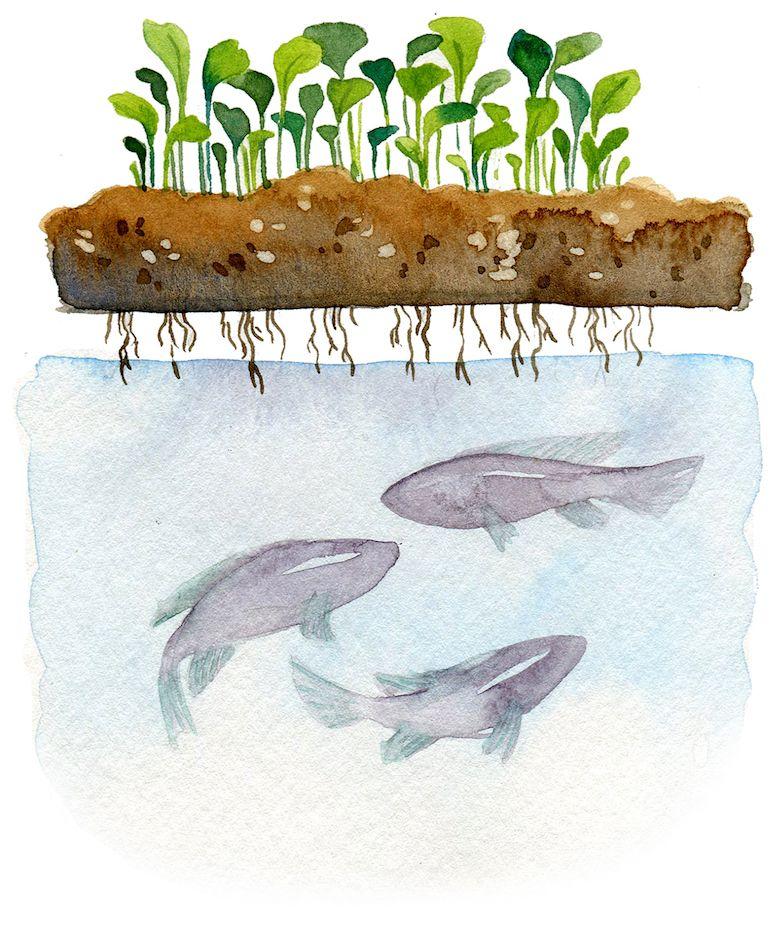 A Guide to Vertical Farming Techniques | Vertical farming ...