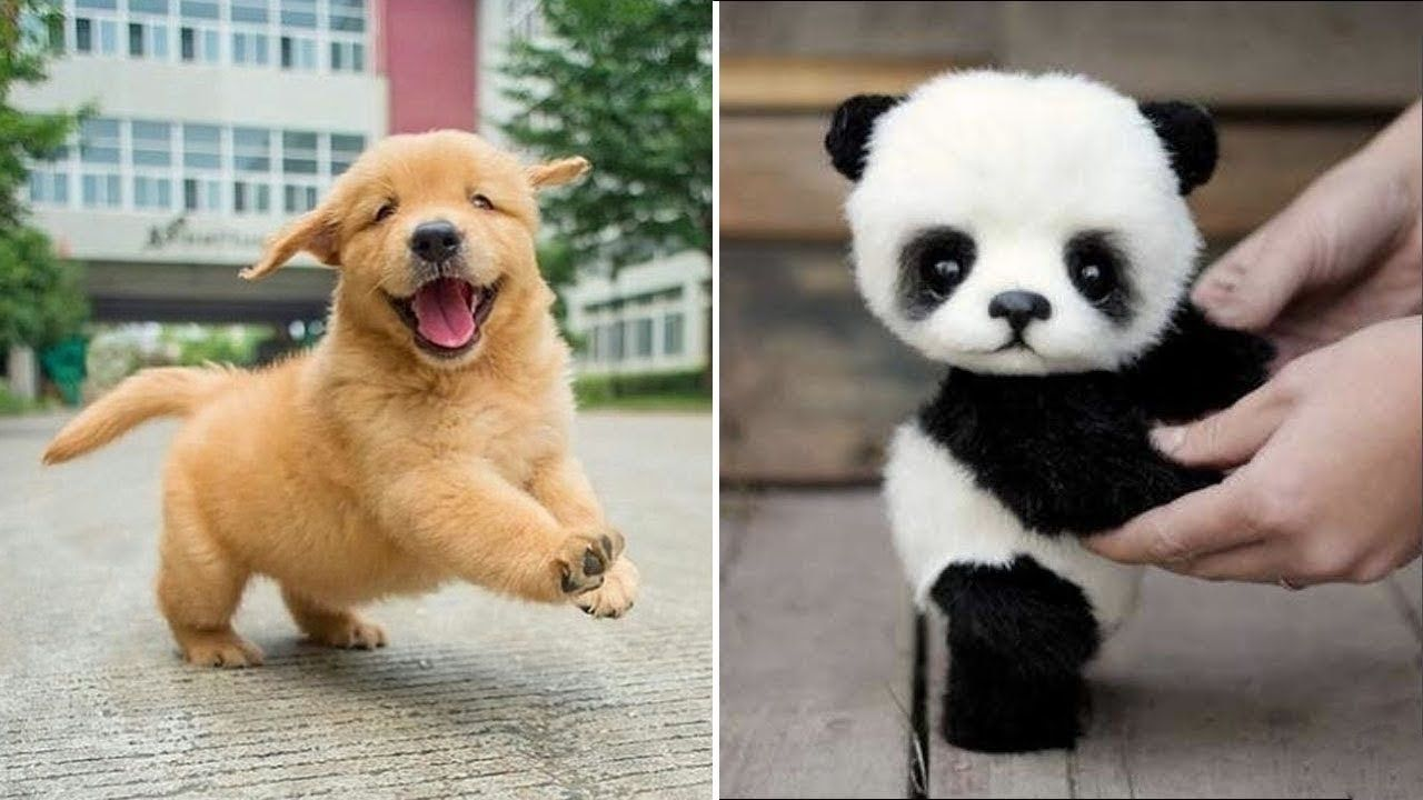 Baby Animals Videos Compilation Cute Moment Of Dogs And Cats