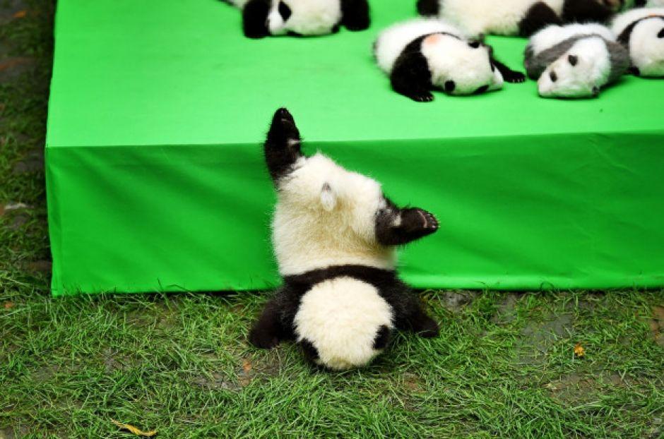 Deze panda's zijn te schattig voor woorden.