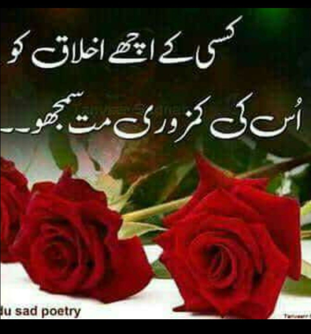 Pin By Safia Habib On Urdu Quotes Urdu Quotes Deep Thoughts Life Quotes