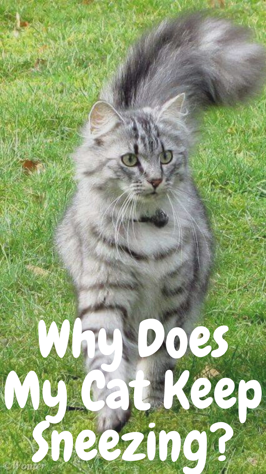 7 Reasons Why Your Cat is Sneezing Cats, Cat sneezing