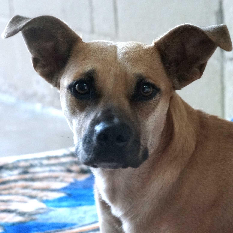 Adopt a Pet Cat adoption, Dog adoption, Animals